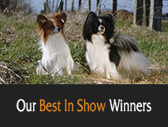 Our Best In Show Winners