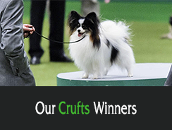 Our Crufts Winners