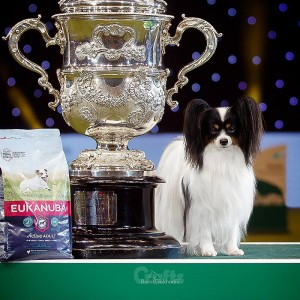 Dylan Best In Show Crufts 2019