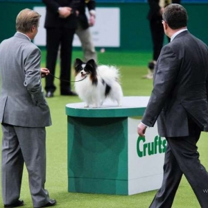 Crufts Toy Group Winner 2009